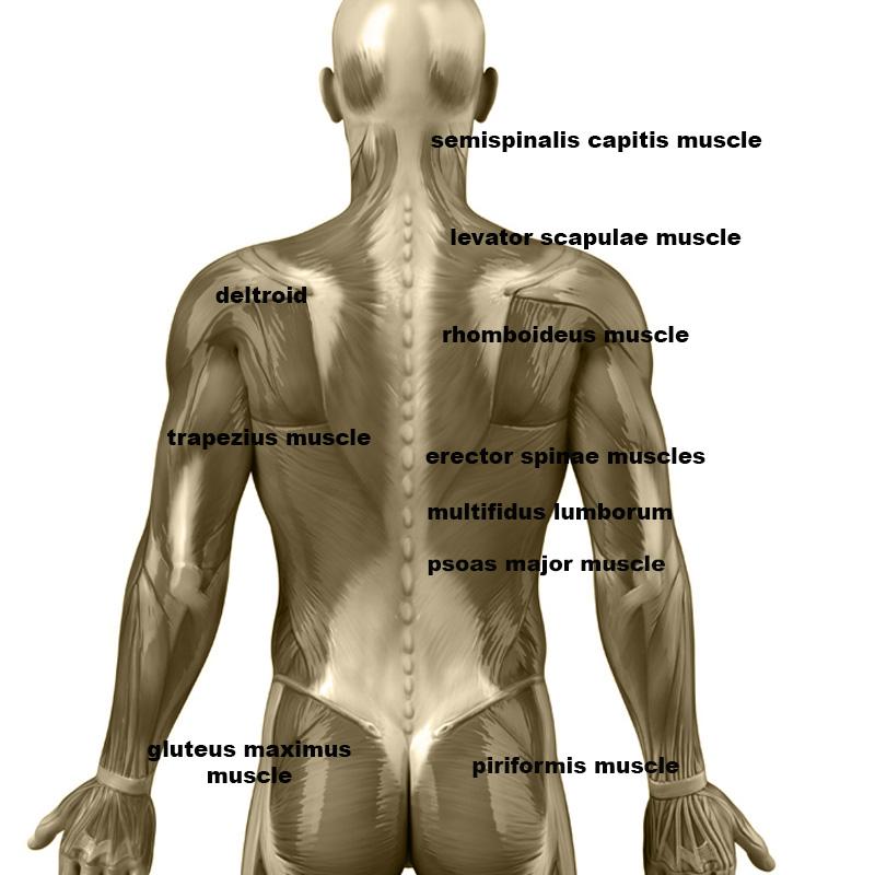 Massage pour les omoplates avec des rouleaux